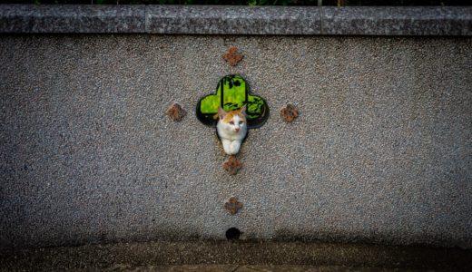 石川町から港の見える丘公園まで散歩したら最高の猫スポット見つけた