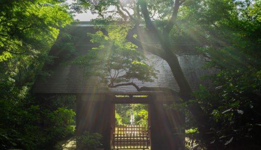 苔の階段が美しい鎌倉の妙法寺に行ってきた【インスタ映えスポット】
