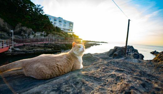 神奈川の猫島『城ヶ島』に行ったら、すごく可愛い猫に遭遇した