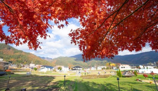 秋の河口湖を観光してきた。紅葉、富士山、ほうとう。どれも最高だった。