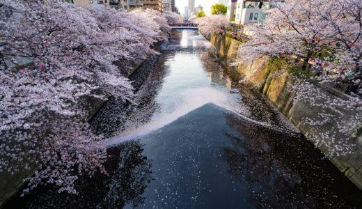 目黒川の桜まつりはカップルにオススメしたい最高のデートスポットだった