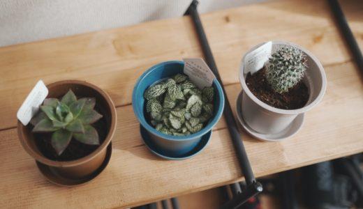 観葉植物を育て始めてみたら部屋のインテリアにもなるし写真も撮れて最高